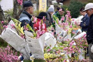 桃のお花の販売は一束200円