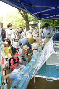 鶴見川の生物を見ることができます