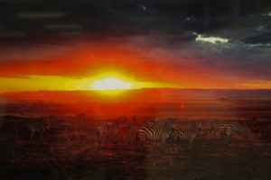 沈みゆく雄大な夕陽とシマウマの群れ