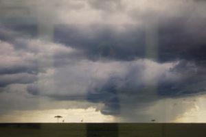乾いた大地を潤す雨雲、悠々と歩くキリン